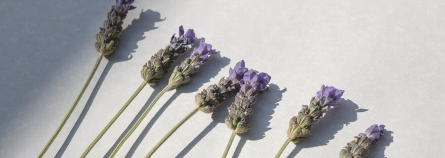 flat lay of a lavender flowers on white surface